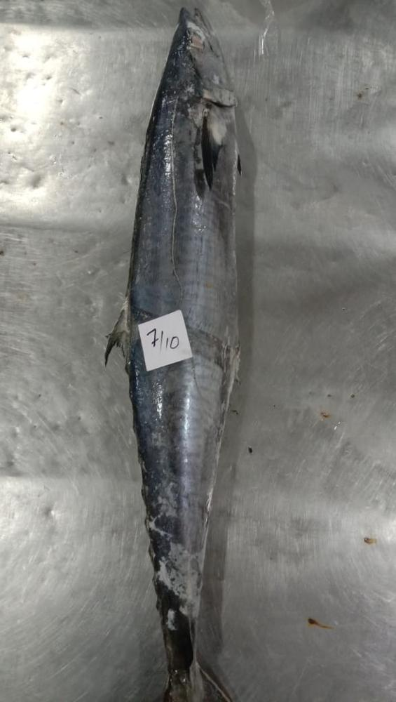 Frozen King Fish King Mackerel Whole