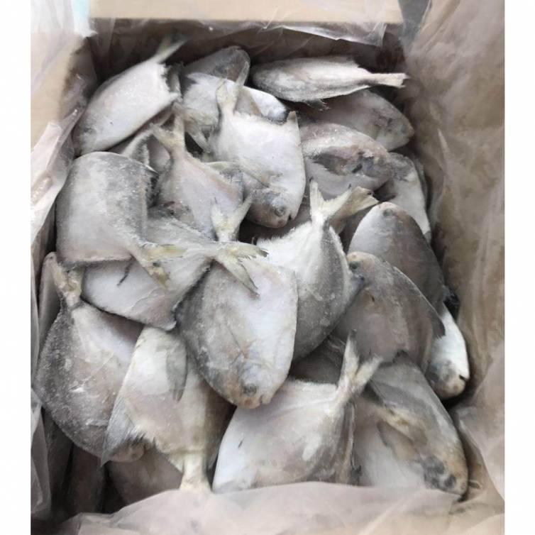 Frozen Silver White Pomfret Whole Fish